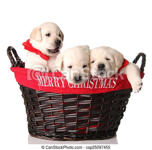 Tres cachorros de Navidad - csp25097455