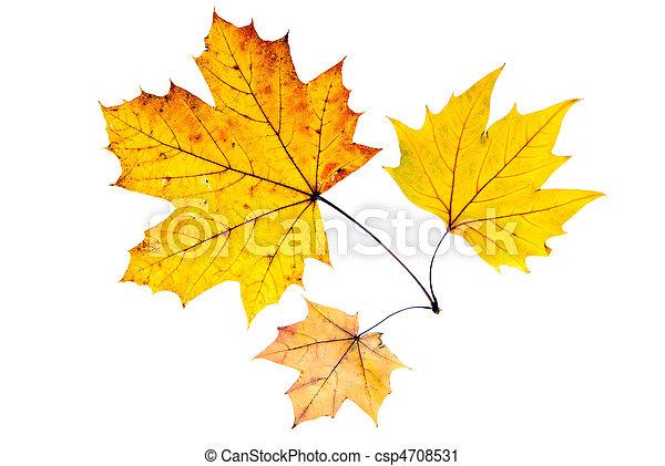 Tres hojas de otoño - csp4708531