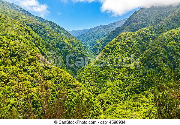 Medio ambiente tropical - csp14590934