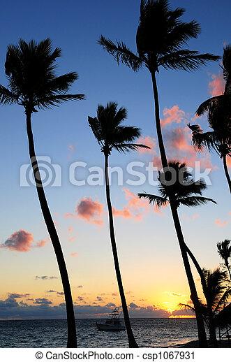 Amanecer tropical - csp1067931