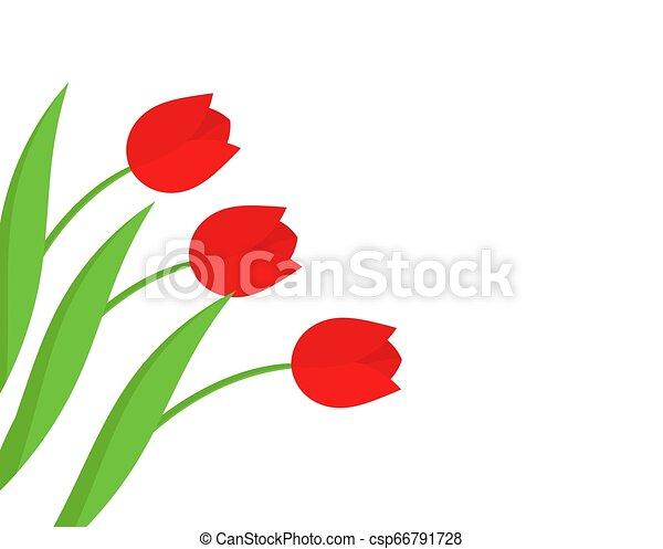 Trasfondo de flores de tulipán rojo. - csp66791728