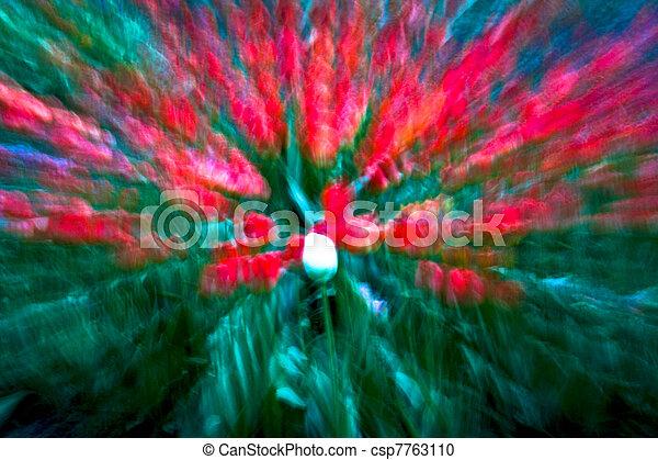Tulipanes en el jardín con una extrema luz expresionista - csp7763110