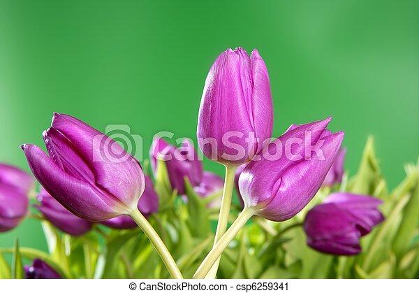 Tulipanes rosas flores verdes - csp6259341