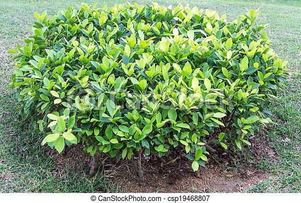 Un arbusto verde - csp19468807