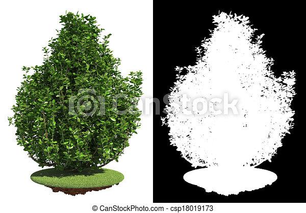 Un arbusto verde con máscara de raster. - csp18019173
