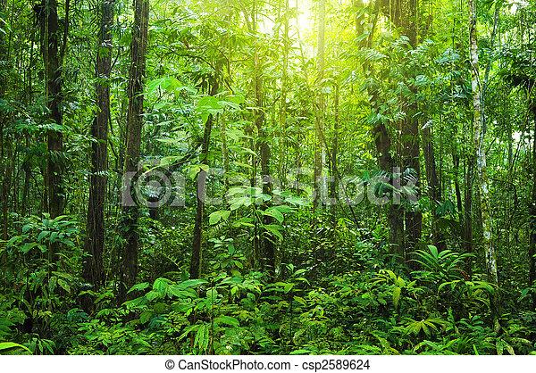 Un bosque denso. - csp2589624