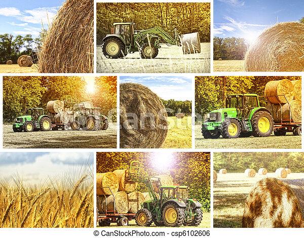 Un fondo agrícola - csp6102606