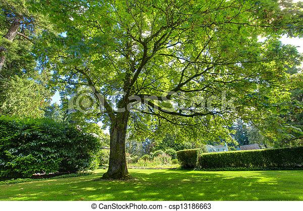 Un gran roble verde cerca de la casa histórica. - csp13186663