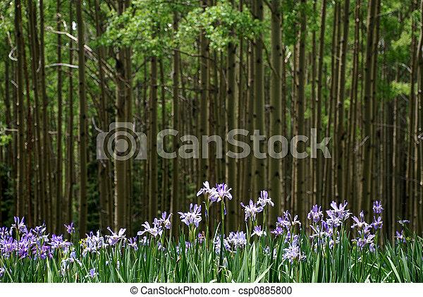 Un iris salvaje - csp0885800