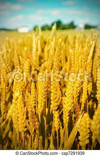 Un paisaje agrícola - csp7291939