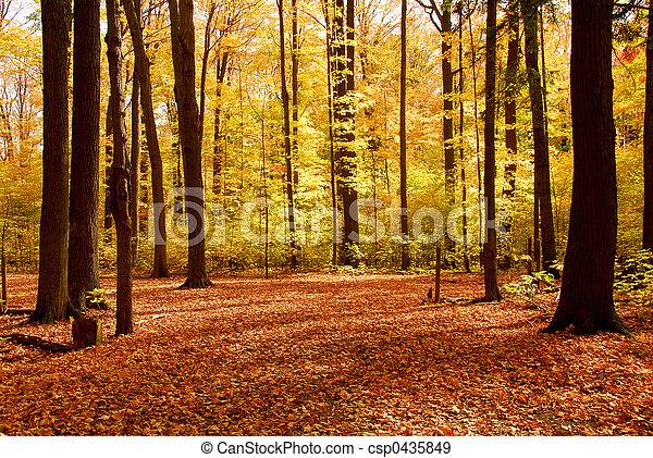 Un paisaje forestal de otoño - csp0435849