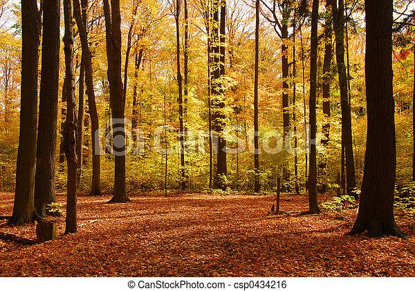 Un paisaje forestal de otoño - csp0434216
