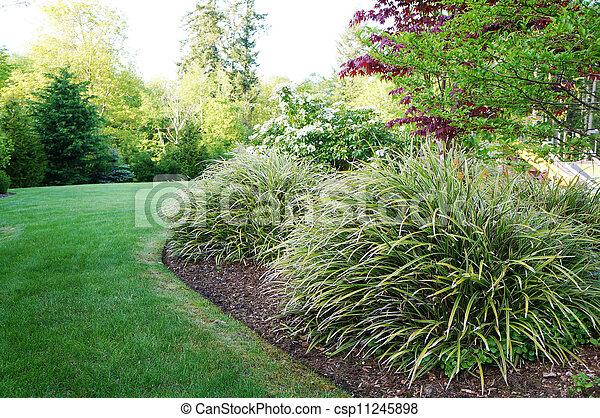 Un paisaje verde en el patio trasero con grandes arbustos de hierba. - csp11245898