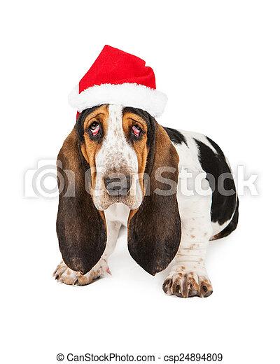 Un perro de Santa Claus agotado - csp24894809