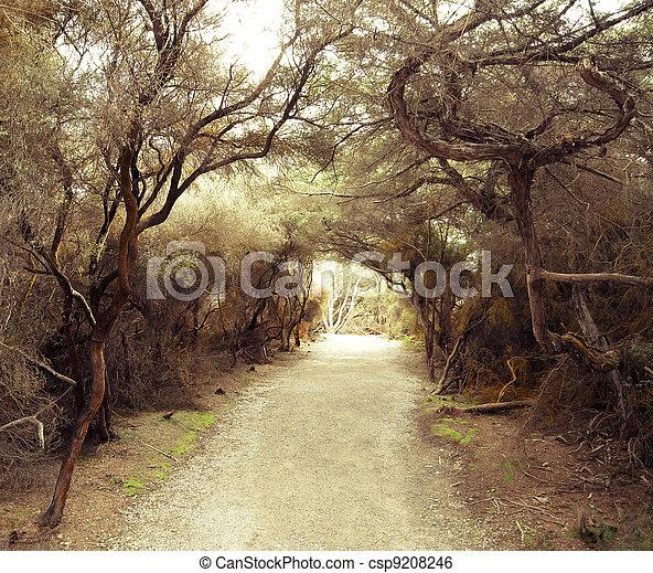 Un sendero misterioso entre los arbustos - csp9208246