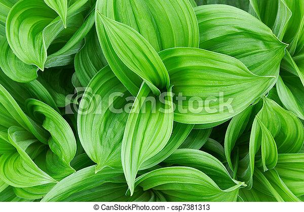 Una hermosa planta verde - csp7381313