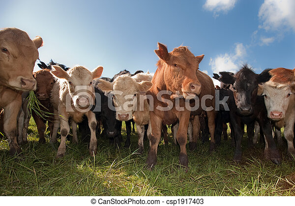 Una manada de ganado - csp1917403