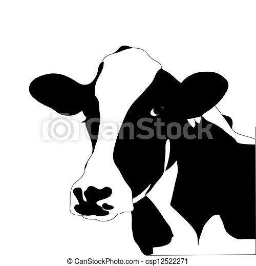 Retrato de vaca negra y blanca - csp12522271