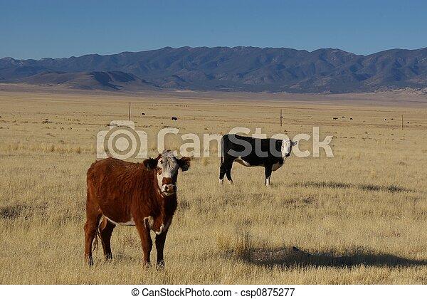 Vaca marrón de vaca negra - csp0875277