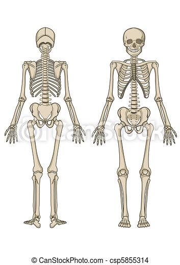 Vector de esqueleto humano - csp5855314