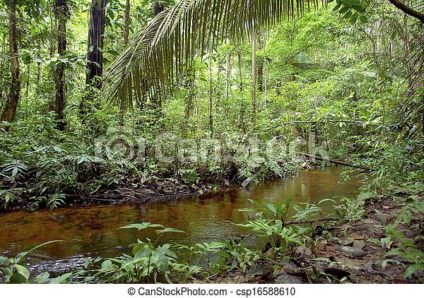 Vegetación amazónica y corriente de agua - csp16588610