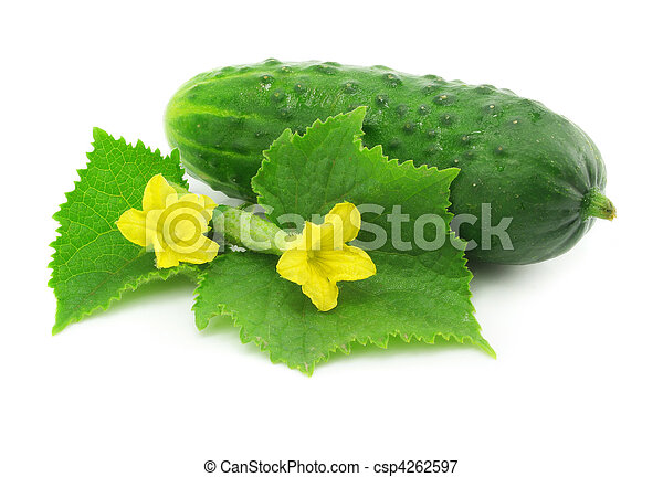 Fruta vegetal de pepino verde aislada - csp4262597