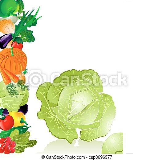 Las verduras repollo - csp3696377