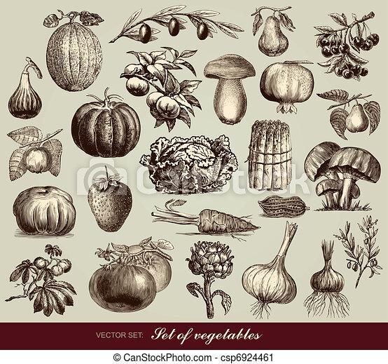 Vectores de verduras - csp6924461
