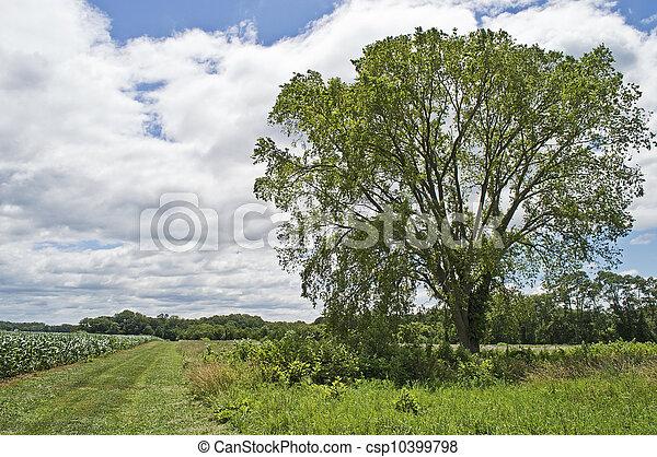Árbol de verano y campo - csp10399798