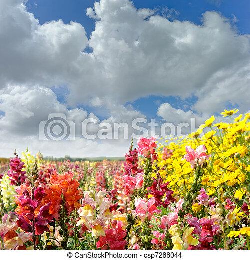 Colorido campo de verano con flores - csp7288044