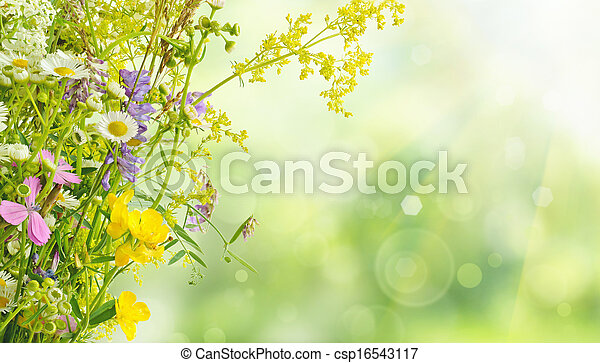 Flores de verano - csp16543117