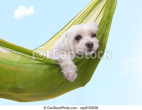 Días de perros perezosos del verano - csp9150039