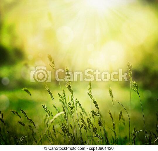 Un fondo de verano - csp13961420