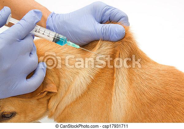 Veto de cerca inyectando al perro - csp17931711