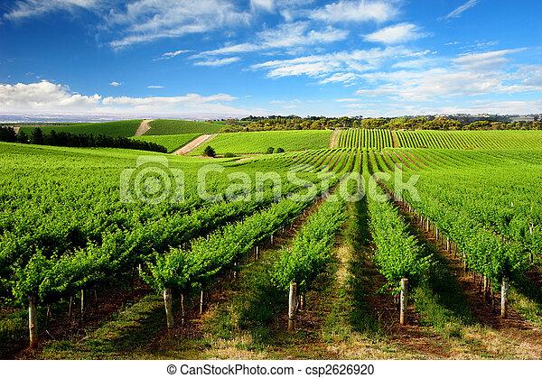 Un viñedo de una colina - csp2626920