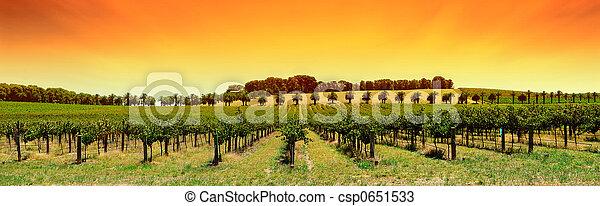 Un panorama de viñedos - csp0651533