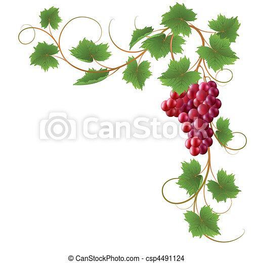 Vine - csp4491124