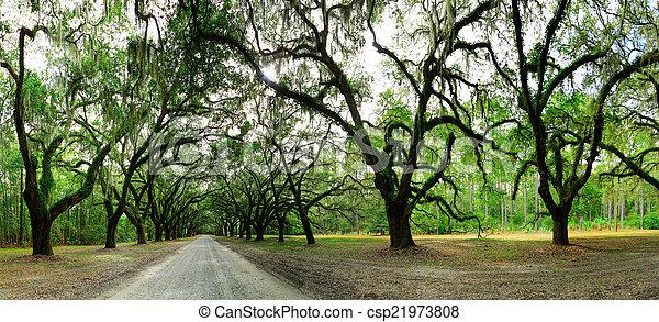 Viejos robles cubiertos de musgo. Forsyth Park, Savannah, Georgia - csp21973808