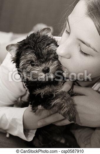 Yorkshire terrier - csp0587910